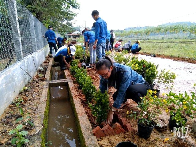 Đoàn xã Tam Đại trồng hoa thay thế cỏ dại ven đường