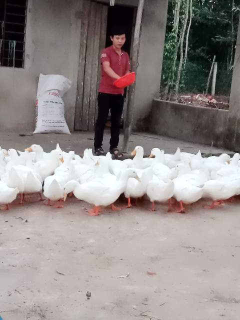 Tuổi trẻ Phú Thịnh sông và làm việc theo gương Bác Hồ; tích cực  tham gia xây dựng phát triển kinh tế địa phương.